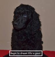 BEGIN TO DREAM Life is good