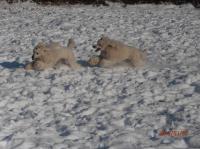 elisa-floyd-neige.jpg